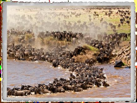 8 Days: A Million Wildebeest (SAFARI DEAL)