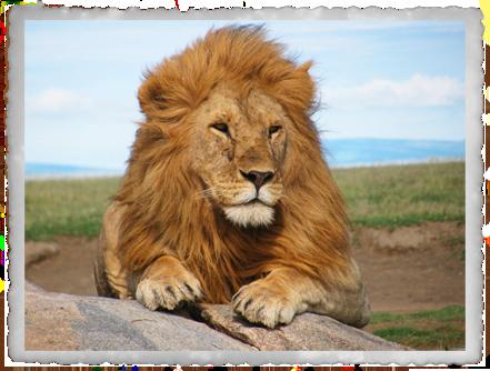 12 Days: World Heritage Safari (Jordan's Fav)