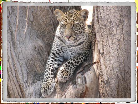 3 Days: The Safari Xpress